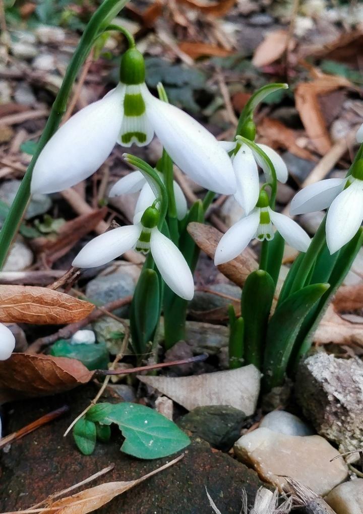 Primăvara începe să își facă simțită prezența la Sibiu