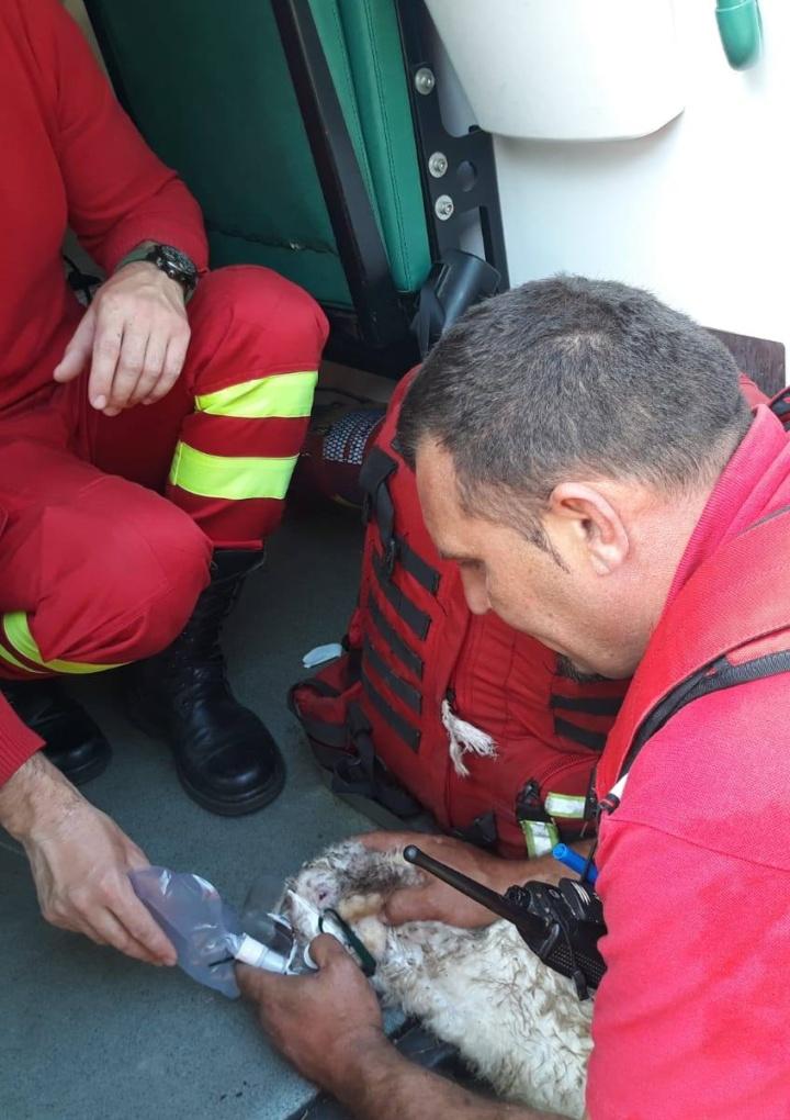 Pompierii îl salvează pe iepuraș dintr-un incendiu