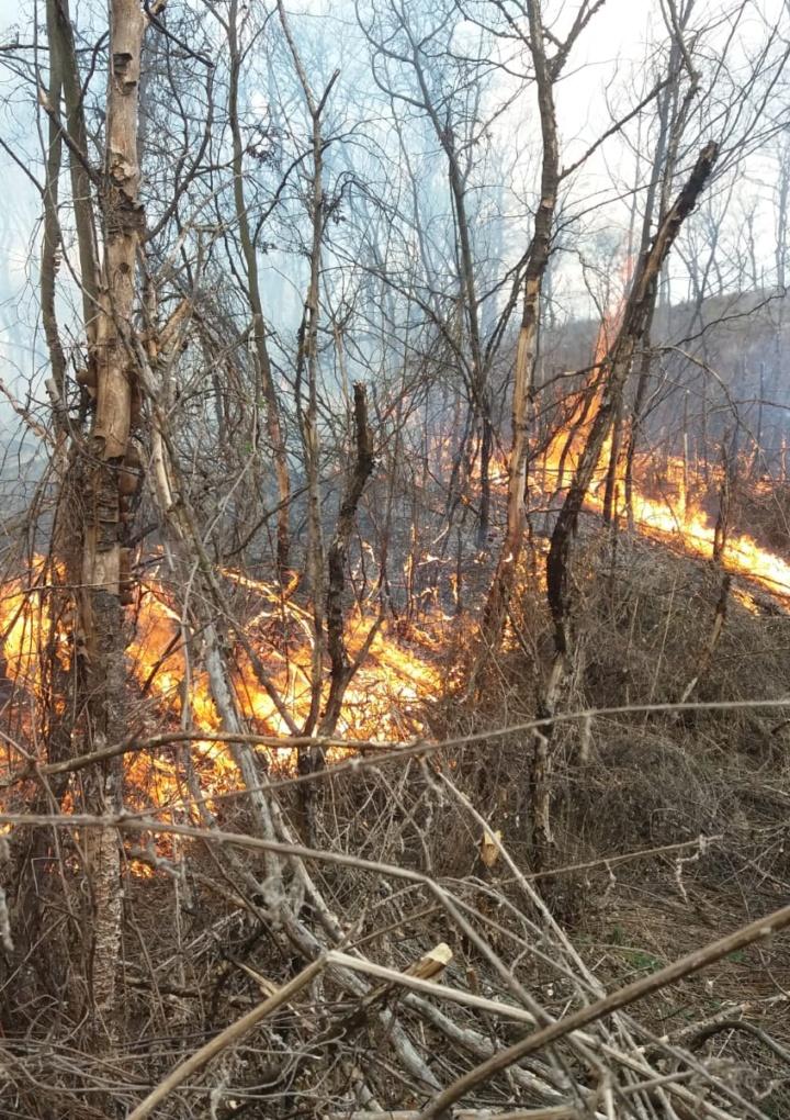 Au ars 5 hectare de pădure în Mălâncrav