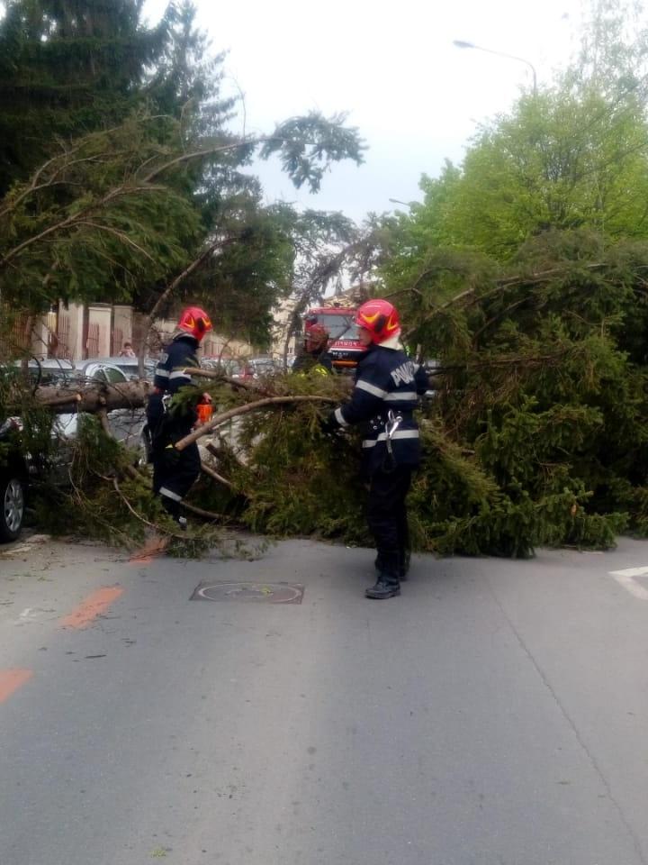 Vântul puternic a blocat drumuri și a provocat pagube în Sibiu