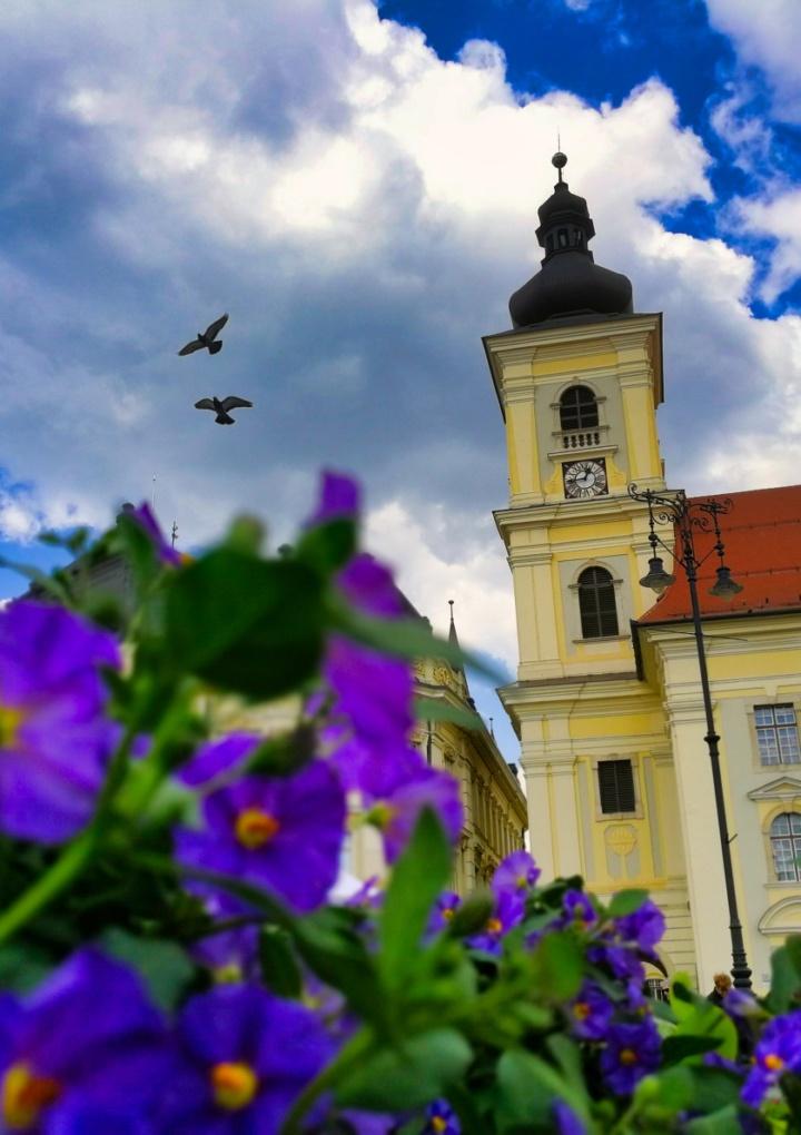 Piața Mare din Sibiu se îmbracă în culoare și parfum