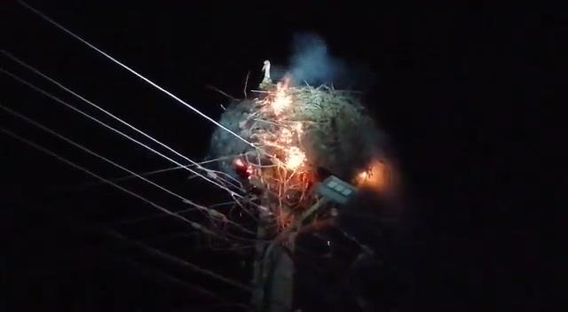 Patru pui de barză au fost salvați după ce un cuib din Orlat a luat foc