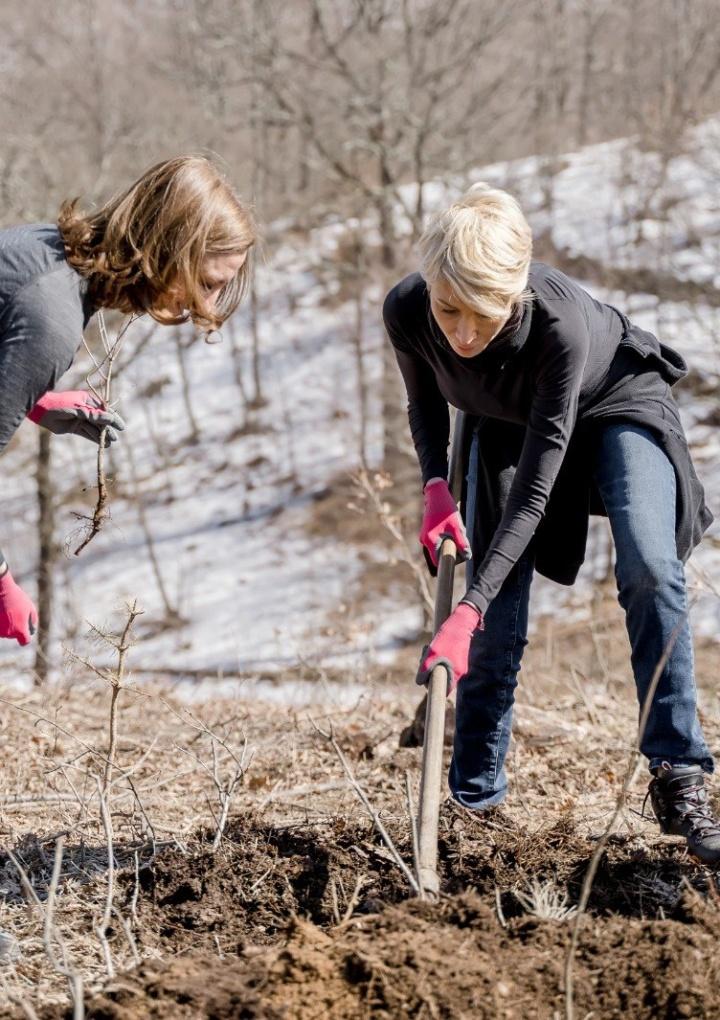 Politicieni din Sibiu, la plantat de copaci fără mască